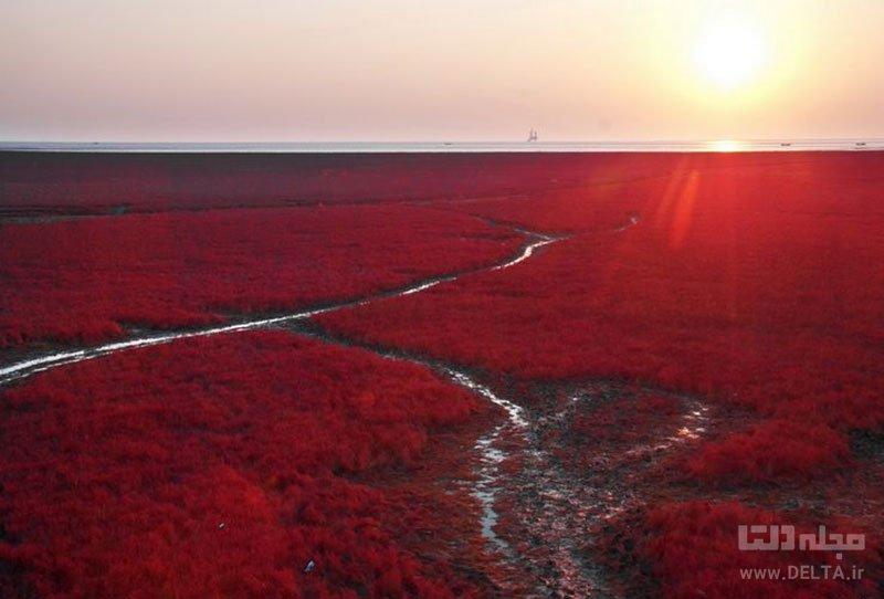 ساحل سرخ رنگ