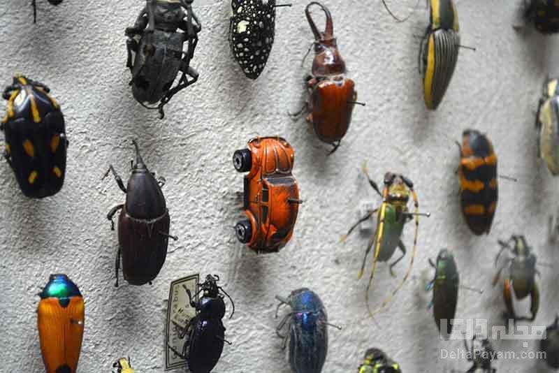 موزه سوسکها