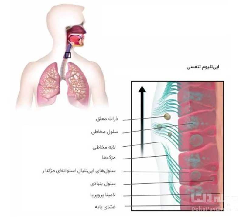 آلودهسازی ریه کویید 19