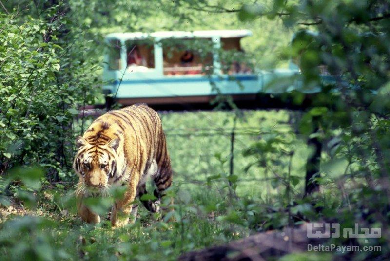 باغ وحش برانکس – نیویورک