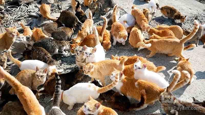 جزيره گربه ها