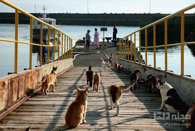 ماجراي ورود گربه ها به جزيره