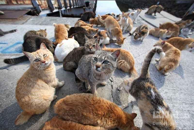 تعامل ساكنان با گربه ها