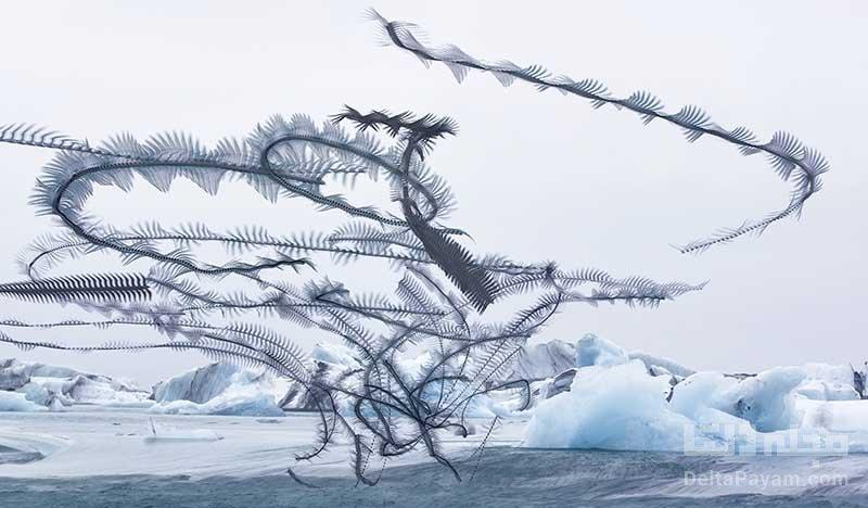عکس الگوهای پرواز پرندگان