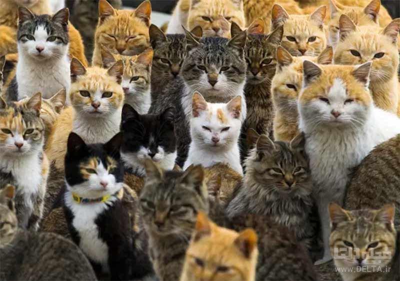ساکنان جزیره گربه ها