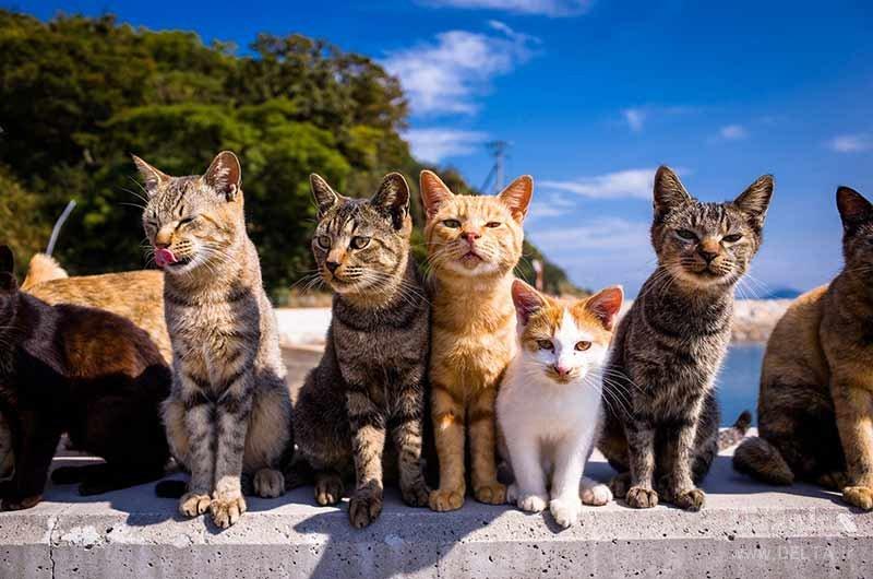 علت وجود این همه گربه در جزیره گربه ها چیست؟