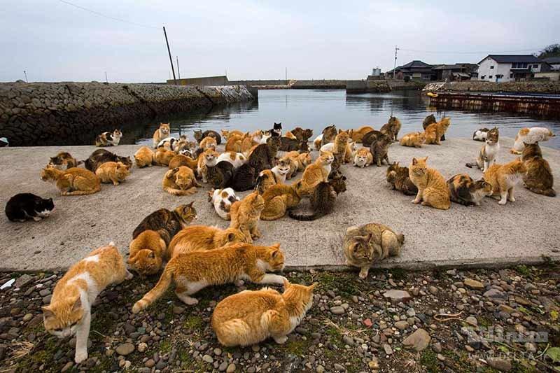 داستان جزیره گربه ها