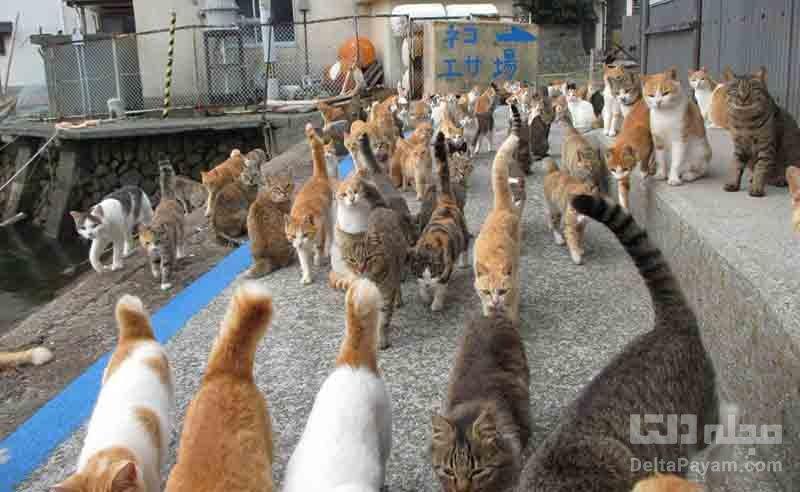 جمعيت گربه ها
