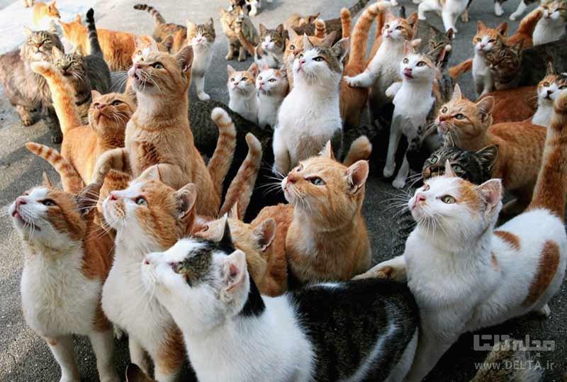 جزیره آئوشیما، جزیره گربه ها