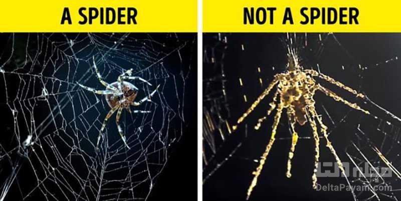 حیوانات و رفتارشان عنکبوت ها