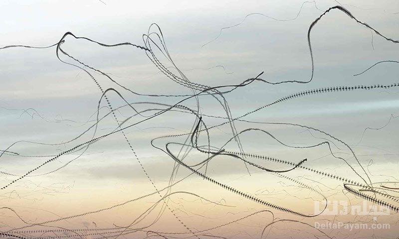 عکاسی از الگوهای پرواز پرندگان