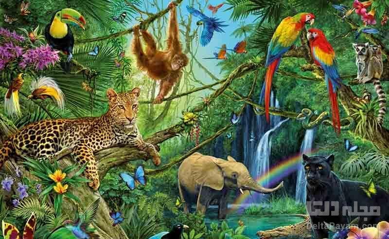 زندگی حیوانات