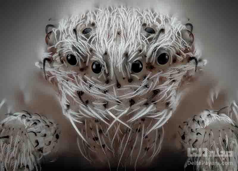 فتومیکروگرافی عنکبوت