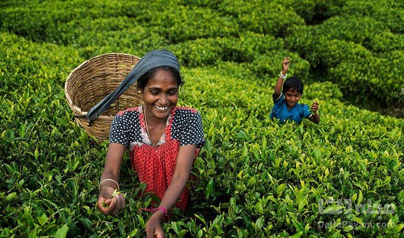 نووارالیا سریلانکا