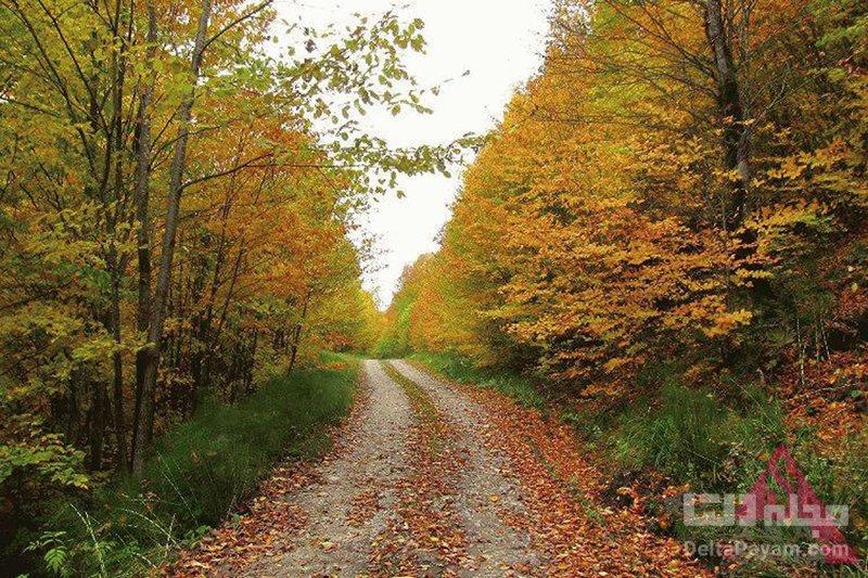 چگونه به جنگل راش برویم؟