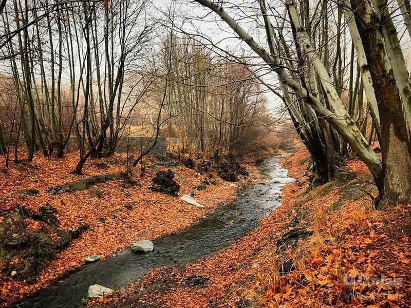 راز جنگل جیغ مشهد