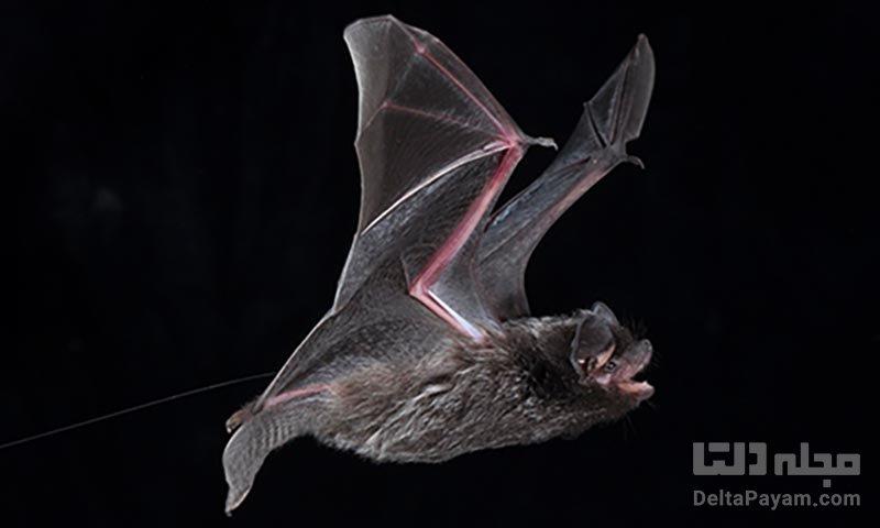 پیش بینی آینده توسط خفاش ها ممکن است