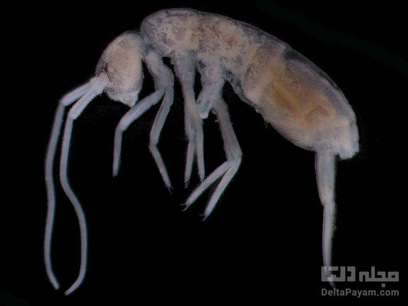 جانوران عجیب در غار کروبرا