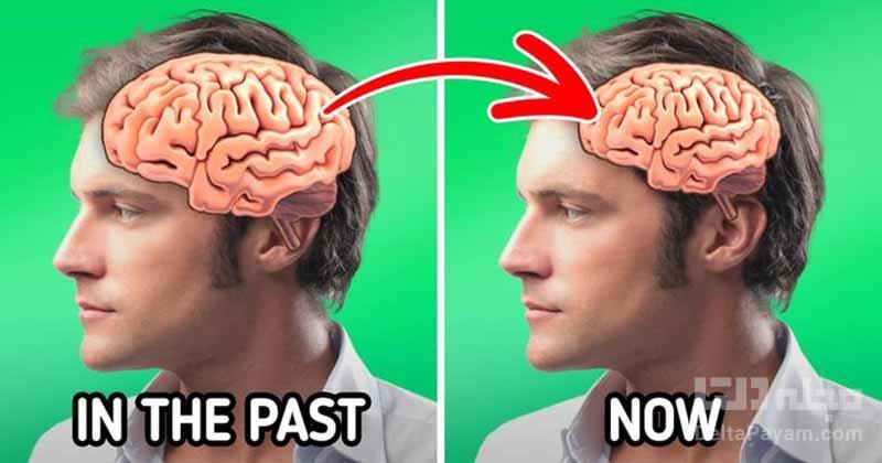 تکامل بدن انسان مغز