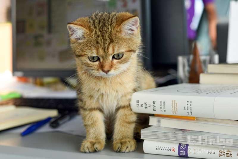 تحقیقات جدید چرا گربه ها میو می کنند