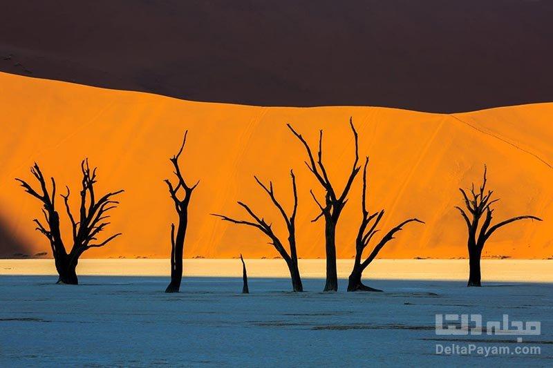 درختان دره مرگ نامیبیا