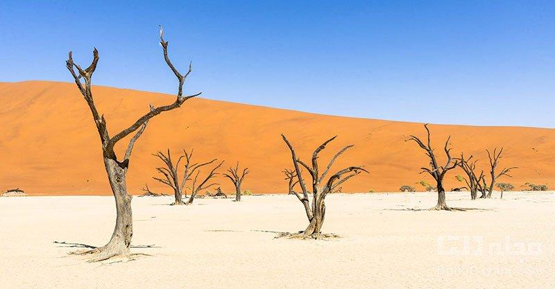 صحرای نامیب