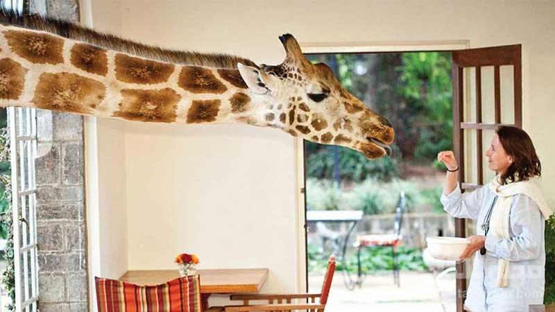 هتل مانور کنیا