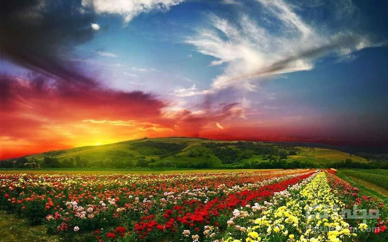 دره گل ها