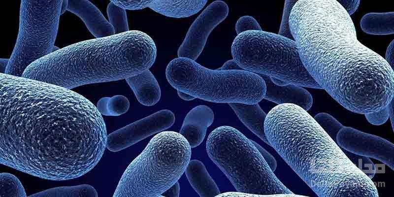 میکروب های روده انسان قبل از بشریت وجود داشتند
