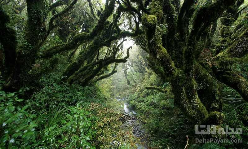 جنگل آئوکیگاهارا، جنگل خودکشی