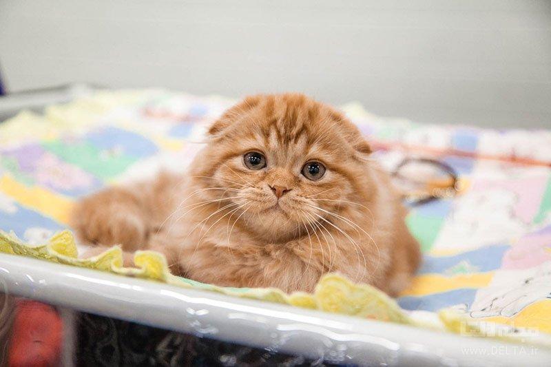 بازدید از خانه گربهها از سرگرمی های غیر معمول والنسیا