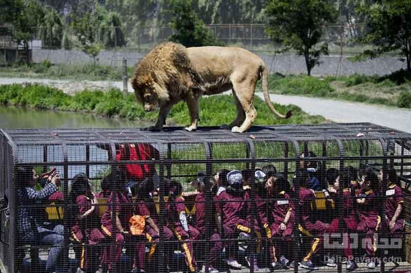 باغ وحش Lehe Ledu ، باغ وحش برعکس