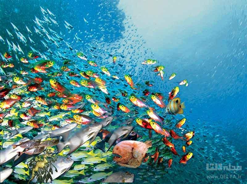 حقایقی در مورد زندگی ماهی ها