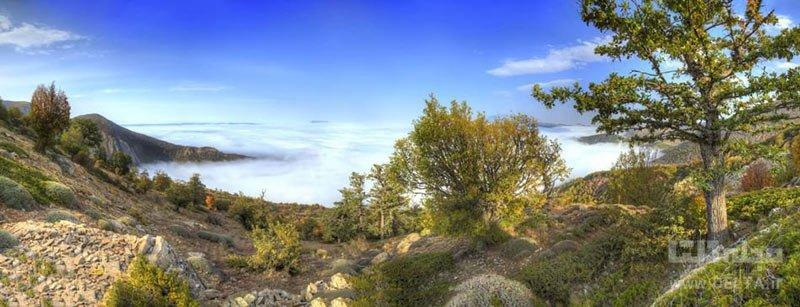 جنگل ابر شاهرود ، محل تلاقی زمین و آسمان