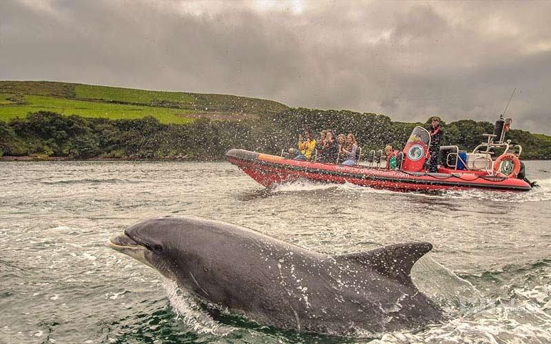 بازدید از دلفین شیرین خلیج دینگل بی ایرلند