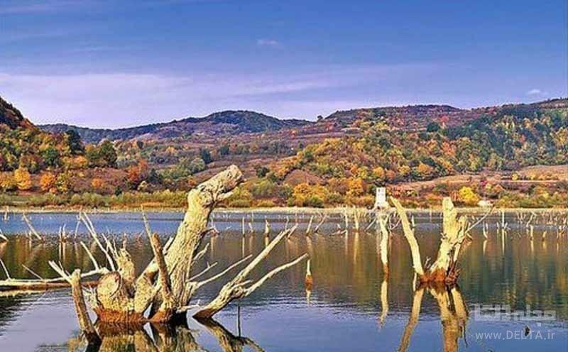 دریاچه بزید یکی از جنگل های زیر آب