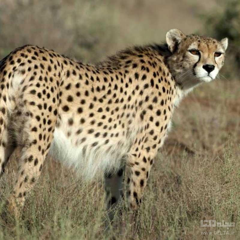 خطرناک ترین حیوانات ایران