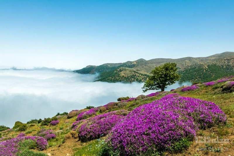 جنگل ابر شاهرود از مقاصد ایرانگردی