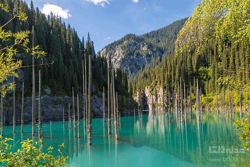 دریاچه کایندی، جنگل های زیر آب