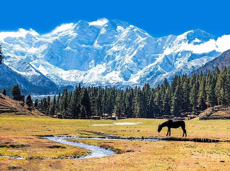 کوه نانگا پاربات یا کوه قاتل