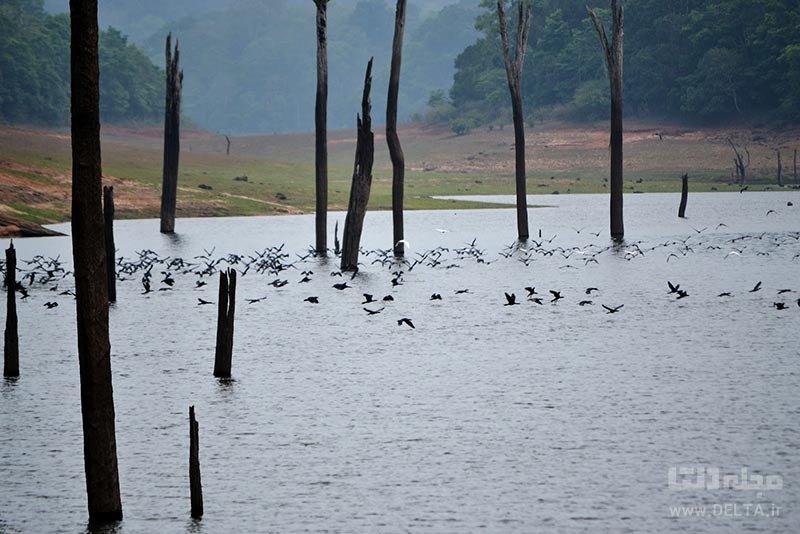 دریاچه پریار یکی از جنگل های زیر آب