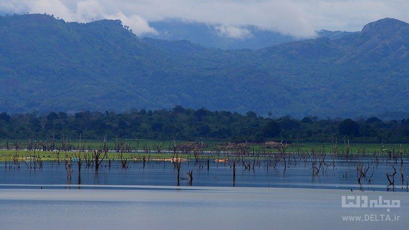 دریاچه Udawalawe یکی از جنگل های زیر آب