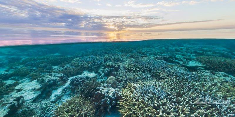 دیواره بزرگ مرجانی از جاذبه های گردشگری در خطر نابودی