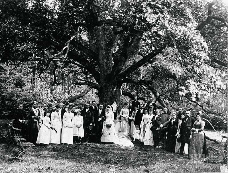 گذشته درخت عروس و داماد در آلمان