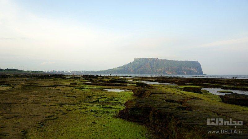پوشش گیاهی و جانوری جزیره سورتسی
