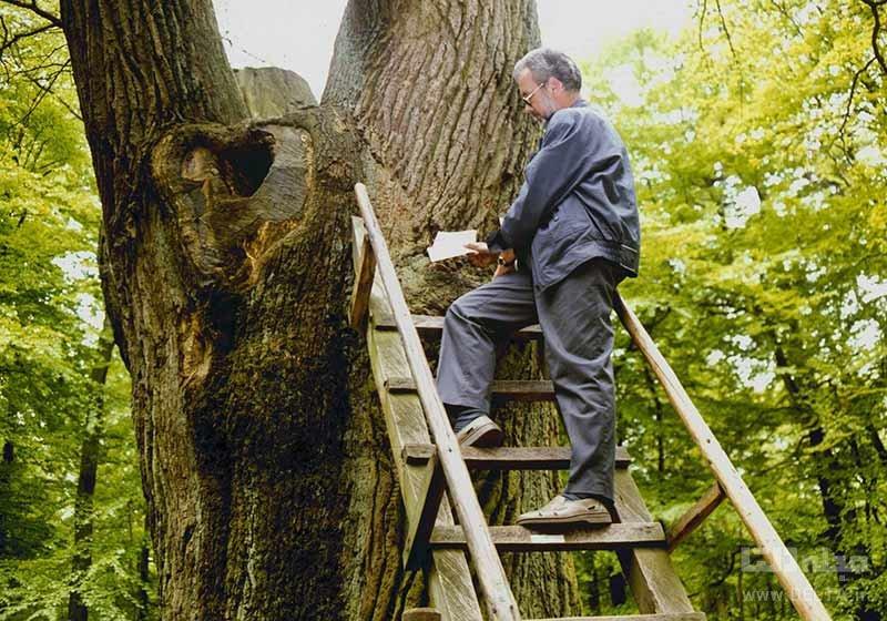 پیامرسان عشق درخت عروس و داماد در آلمان