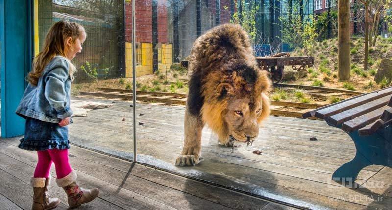 اقامت در لانه شیرها در سرزمین شیرها