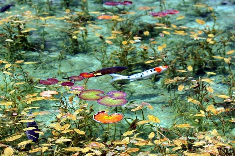 نام واقعی دریاچه مونت در ژاپن