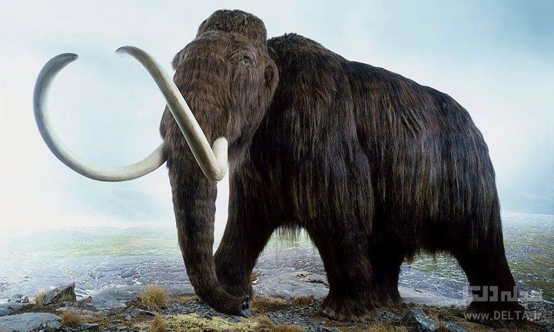 حیوانات در حال انقراض