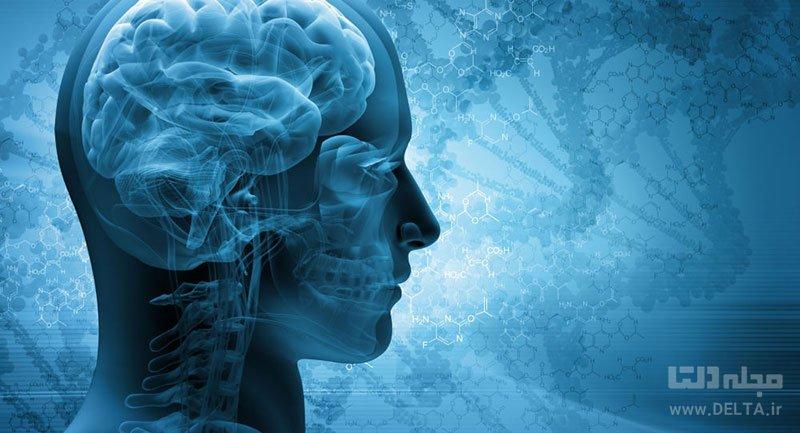 مغزهای جوانتر
